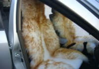 Меховые чехлы в салоне автомобиля